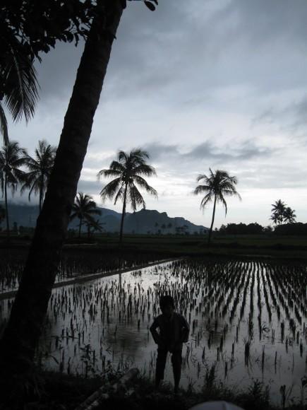 Purwakarta rice fields, Indonesia